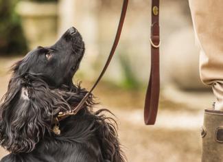 Le Chameau Dog Lead – Marron Fonce