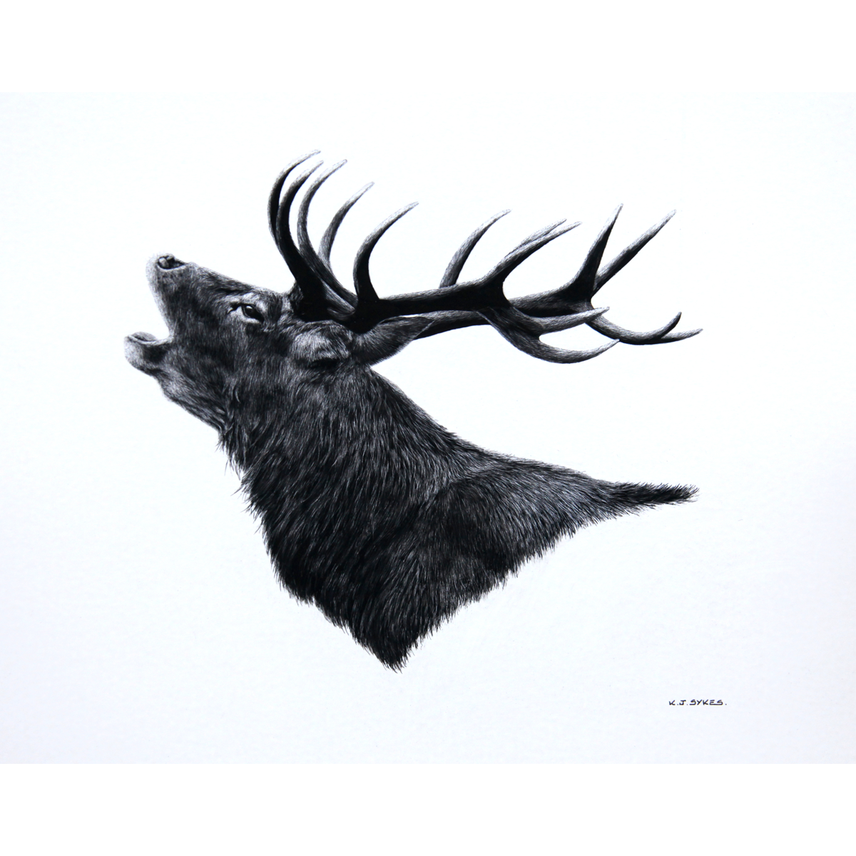 Keith Sykes – Roaring Stag Card