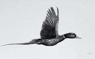 Keith Sykes – Flying Phuck Card