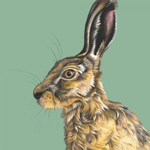 Harry Hare