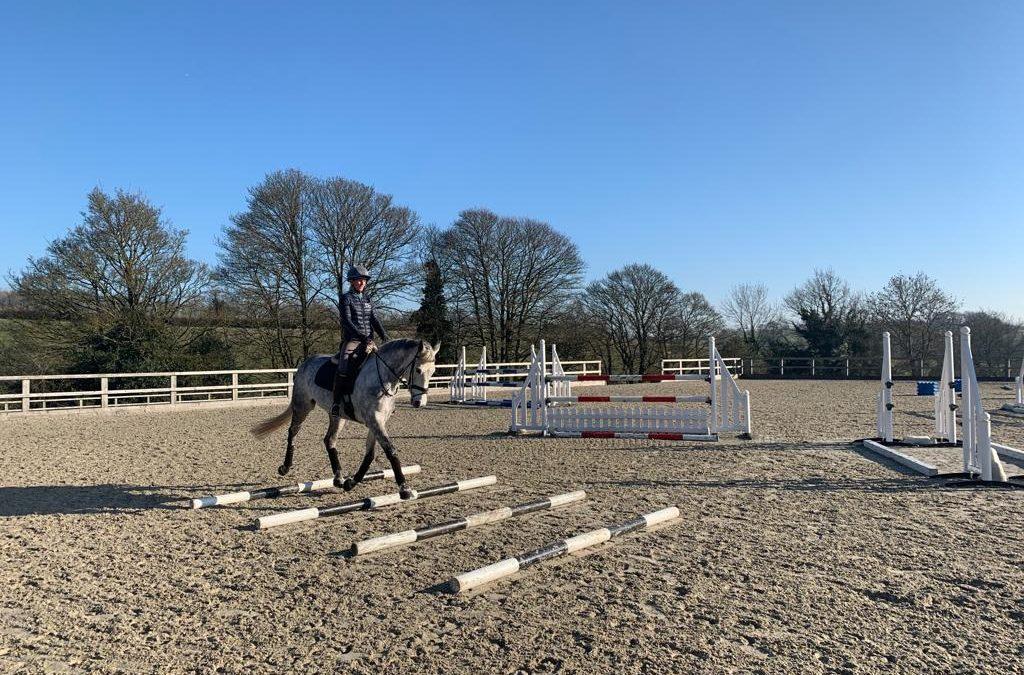 Training Dassett horses using pole work exercises