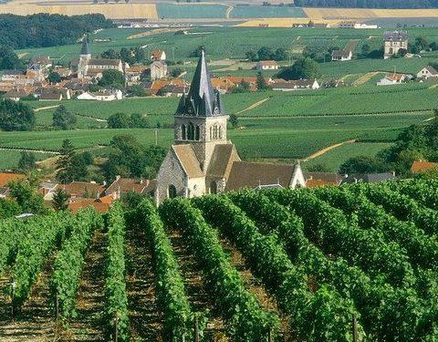 Reims Champagne Tour