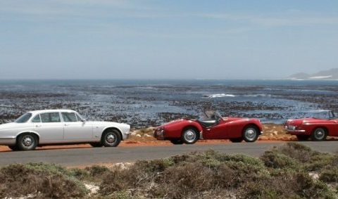 South African Classic Cape Safari