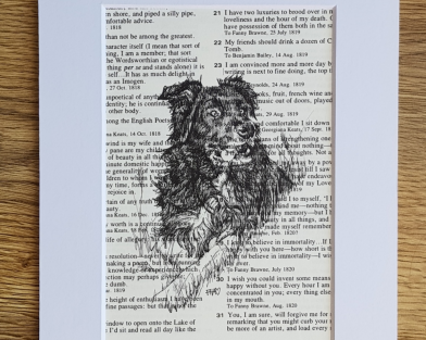 Border Collie Pen & Ink Drawing
