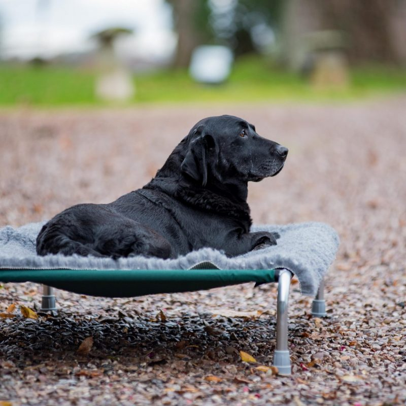 Berkeley Dog Beds