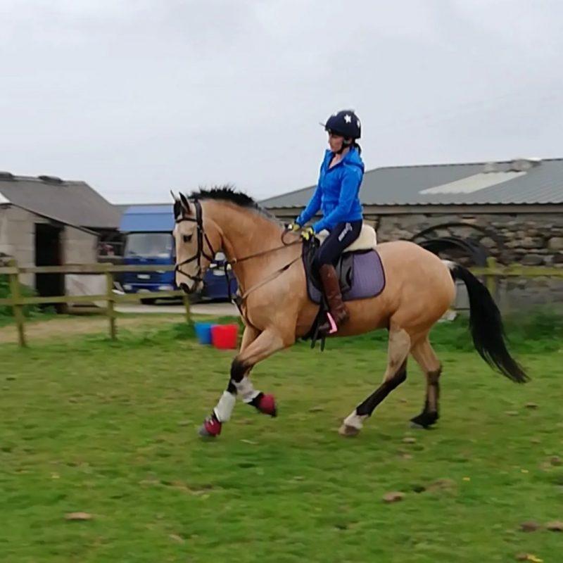 Glenview Farm Equestrian