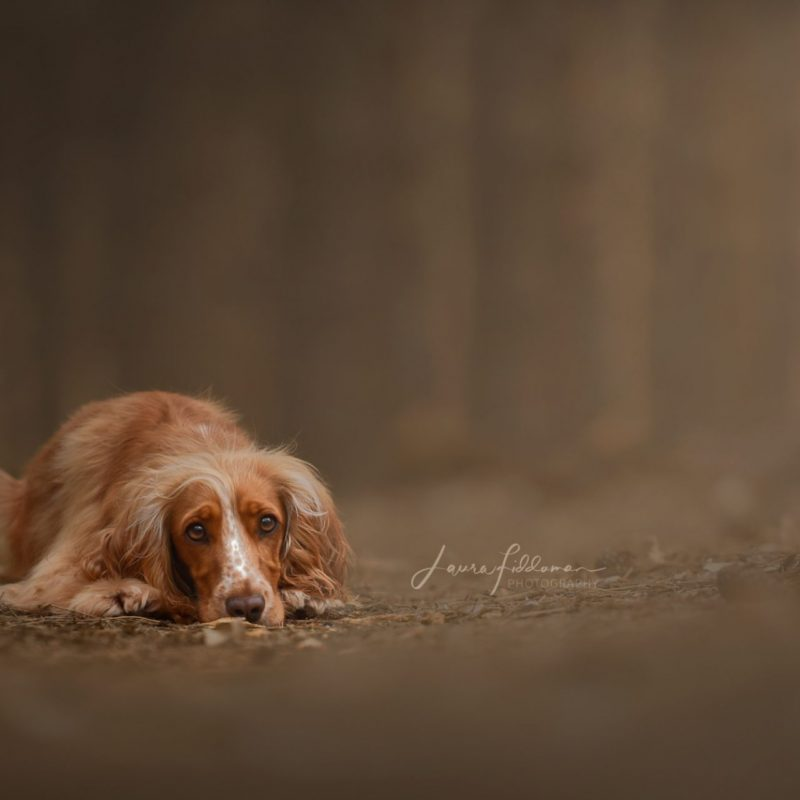 Laura Fiddaman Photography