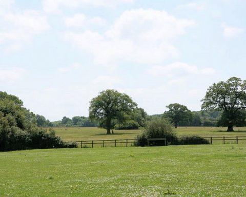 Willoway Horsemanship
