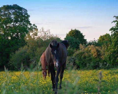 Gillian Anderson Equestrian Services -Stone Farm