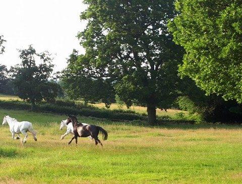 Thornhill Farm Retirement Livery