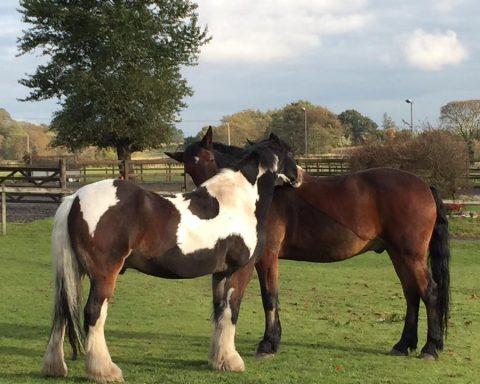 Westmuir Equine Services