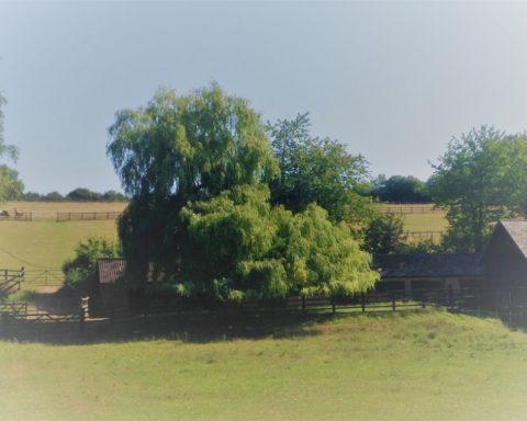 Langton Farm Stables