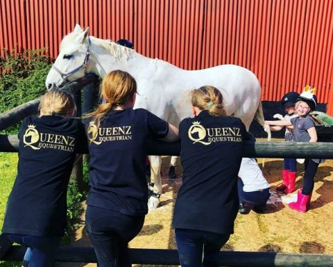 MS Equine Services