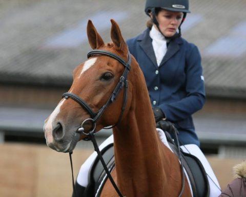Laudan Equestrian