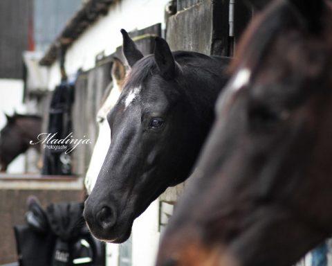 AP Equestrian