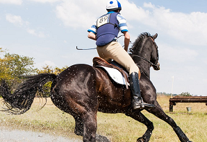 The Advantage of Equine Physiotherapy Services