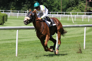 The Top 5 Most Popular Horse Racing Competitions