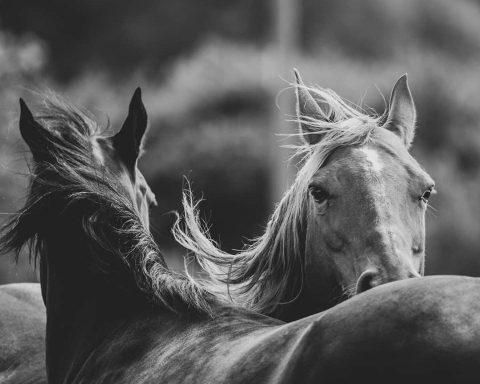 Curland Equestrian Centre