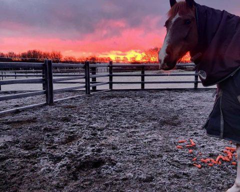 AKB Equestrian