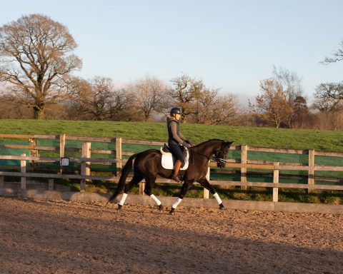 Rest Harrow Equestrian