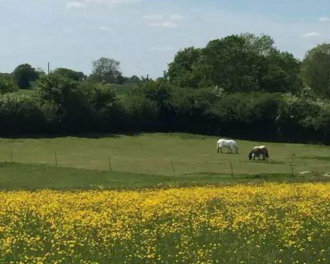 Meadow Hill