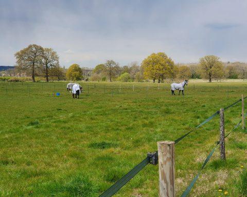 MB equestrian
