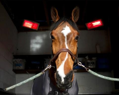 YP Equestrian