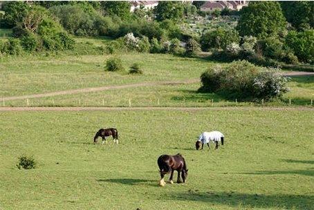KJD Equestrian