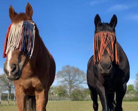 Stonehouse Equestrian