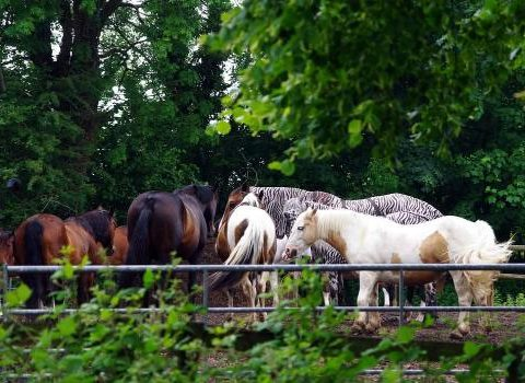 Hartswood Natural Livery