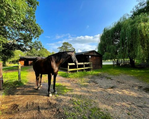 Shalford Stables