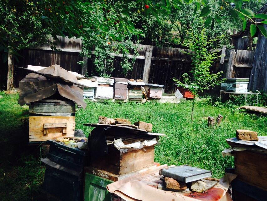 Bee farm 4