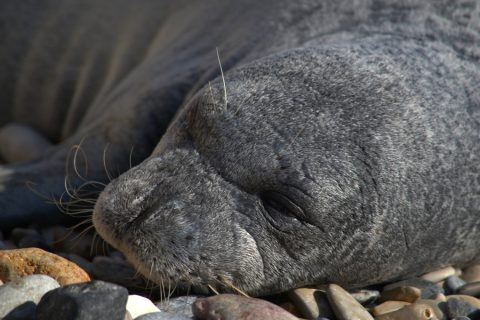 Greece – Meet Argiro the Monk Seal!