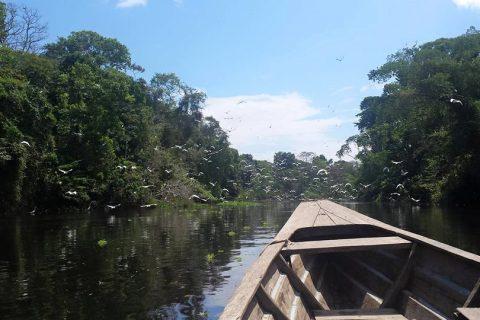 Peru – The Life of a Tropical Bird Ecologist