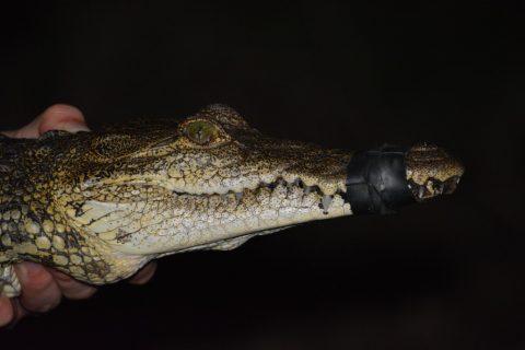 Mexico – Aguadas….Just for Crocs