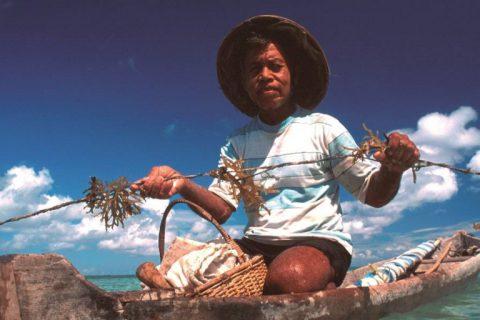 Indonesia – Reducing Overfishing by Farming Seaweed