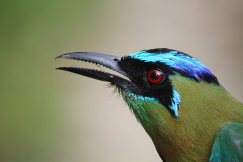 Mexico – Toucan play that game