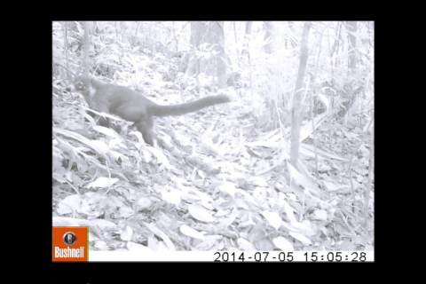 Top 5 Camera Trap & Marine Footage from the Field