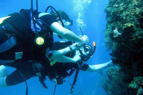 Honduras – Saving Coral Reefs