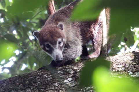 Mexico – Mammal Tracking