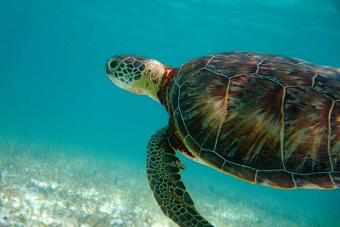 Mexico – Can you Sea Turtles?