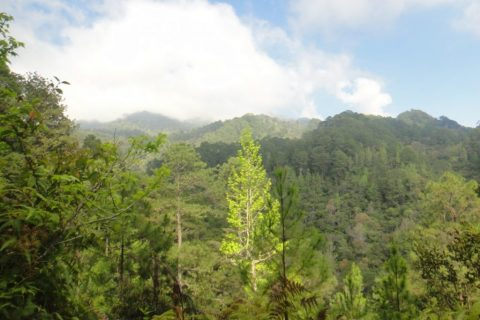 Honduras – Irish Botanical Expedition, Spring 2016