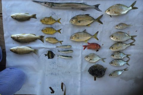 Indonesia – Coral Reef Fisheries