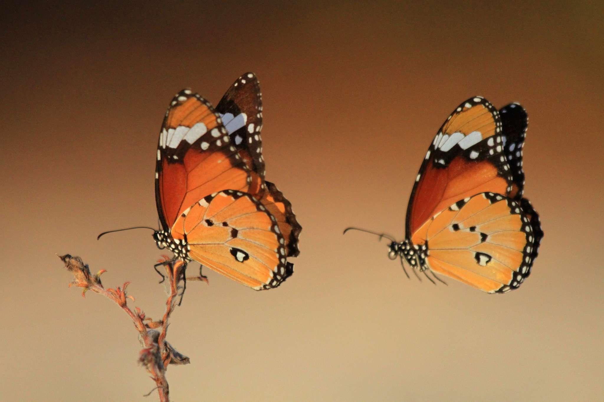 2-school-brochure-2018-dave-andrews-butterflies-matsedroy