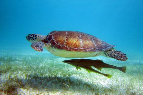 Mexico – Akumal Marine Protected Area