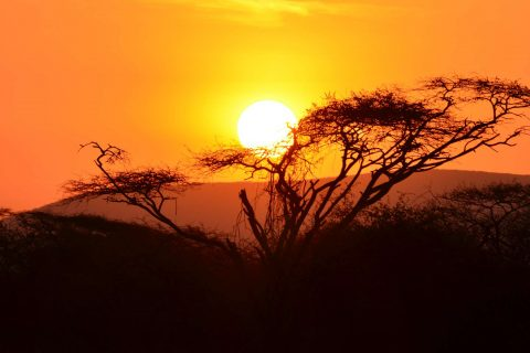 African Sunset - Tortilis