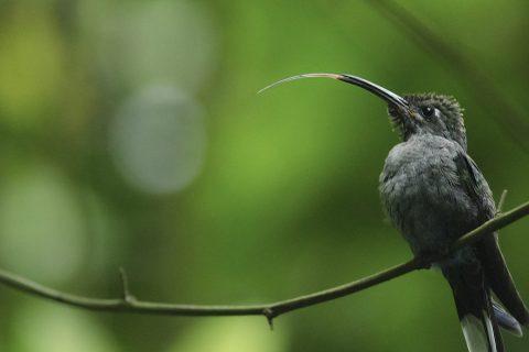 HondurasAchyuthanSrikanthan2