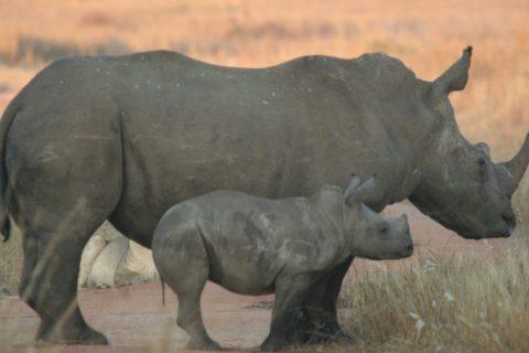 SouthAfricaGerhardLorist