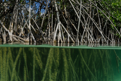 Mexico – Mangrove Research