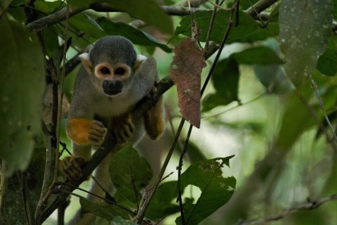 Peru – Enter the Forest